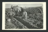 Men harvesting potatoes